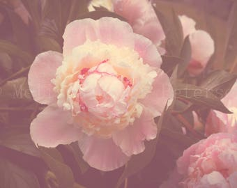 Pink Peonies, Flower Photography, Fine Art Print, Nature, Flower Garden, Floral Wall Art, Blooms, Blossoms, Peony Home Decor