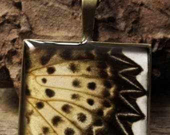 PhbeaD- Large Square Pendant with REAL BUTTERFLY WINGS: entomology jewelry, real insect jewelry, real wing jewelry, real butterfly wings