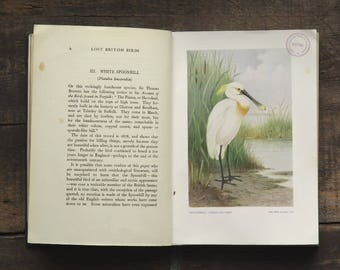Vintage bird book 1920s Rare Vanishing and Lost British Birds illustrated by H. Gronvold former library book