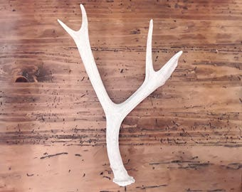Real natural decorative deer antler design decor crafts art centerpiece gift rustic natural antler sheds