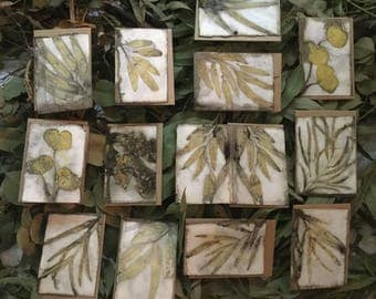Natural Plant Dyed Cards