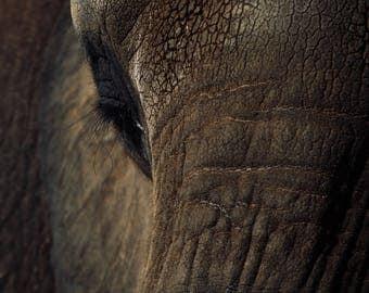 The soul of an elephant original photograph