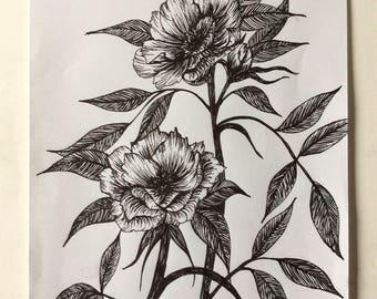 Peonies Growing Free Original Ink Drawing on Paper