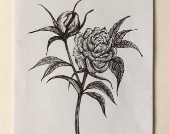 Vintage Peonies Original Ink Drawing on Paper