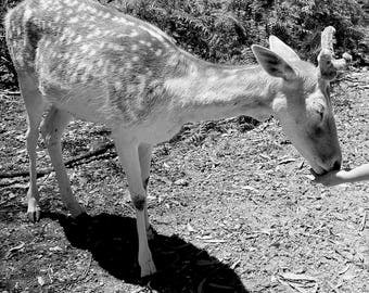 Black and White Animal Collection - Reindeer Kisses