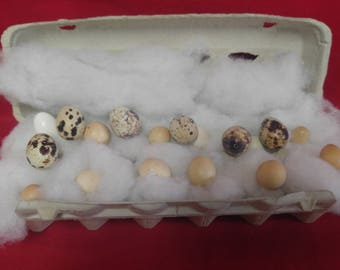 Blown/Hollow Quail Eggs 18 eggs-Crafts-DIY-taxidermy-different size/color/shape/craft/bird/nest