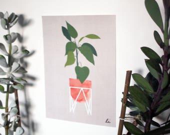 Skandi Plant A5