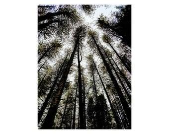 Digital Downloadable Photo - Whispering Wood