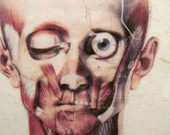 Ocular Tile Coasters - Set of 4 // Eye // Eyeball // Medical art // Anatomy // Anatomic // Weird // Creepy