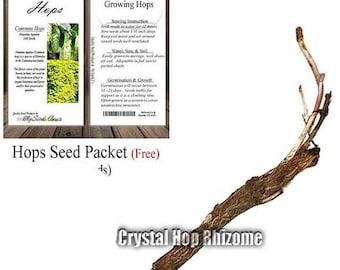 Crystal Hop LIVE Rhizome - Humulus lupulus - FREE Hops Seeds with Order