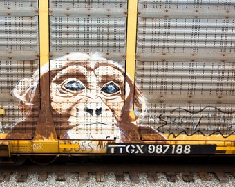 Chimp: Train are, graffiti. Frame not included. Individually photographed and printed by Frank Heflin