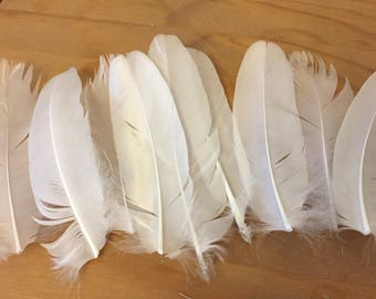 Ten Wild Swan Feathers ~ Magick or Crafts ~ 4-5 Inches