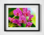 Flower Photography, Flower Photo, Nature Photography, Orchid Photo, Orchid Wall Art, Nature Wall Art, Wall Art, Fine Art Photography, Pink