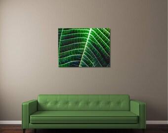 Leaf Photography, Macro Photography, Nature Photography, Nature Wall Art, Nature Wall Decor, Fine Art Print, Green Wall Art, Leaf Art, Art