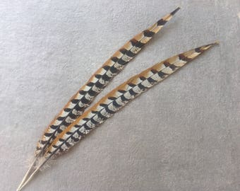 Reeves pheasant Tail Feathers - long Tail Feathers - Reeves pheasant feathers - 1565