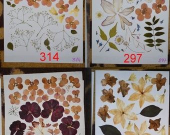 Real pressed leaves and flowers #314 #297 #410 #291