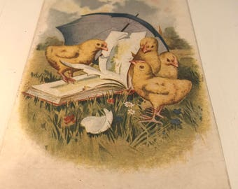 Antique Vintage Easter Post Card, Chicks with Book, Ephemera, Early 1900s