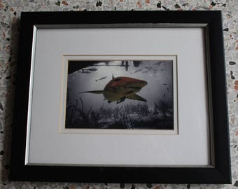 BOAT LEMON - Lemon shark framed and double matted under glass with hook and stand