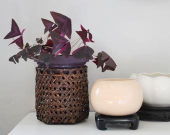 ceramic  planter with wood stand, jungalow decor, indoor plants