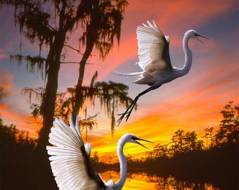 Two Egrets at sunset in the Okeefenokee swamp