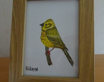 Hand painted Wild bird collection - Yellowhammer