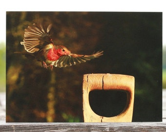 Robin photo card, robin greeting card, blank card, bird card, wildlife card, animal card, birthday card, Christmas card, nature card