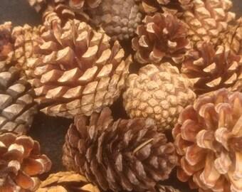 Small Box Of Pinecones
