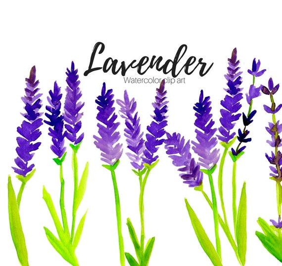 lavender clipart floral clipart scent clipart flower clipart rh etsystudio com English Lavender Flower Clip Art Rosemary Clip Art