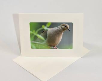 Mourning Dove - Folded photo frame card