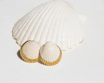 Prickly Shell Post Earrings   Florida Seashell   Ocean Jewelry