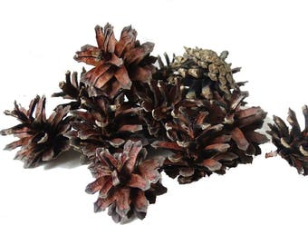 4-6 cm pine cones,500g(approx 25-30 pieces)natural pine cones,Pinus Silvestris,100% natural,christmas decorations,home decorations,rustic