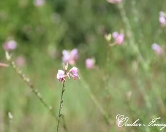 Wildflower Print, Pink Wildflower Wall Art, Wildflower Nursery Decor, Wildflower Photography, Pink Flower Greeting Card/NoteCards,Girls Room