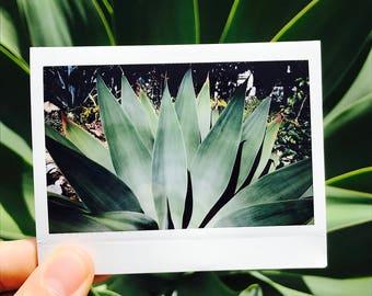 Original Polaroid Succulent Art Print - One Of A Kind Film Photo - Glossy finish (Instax Wide)