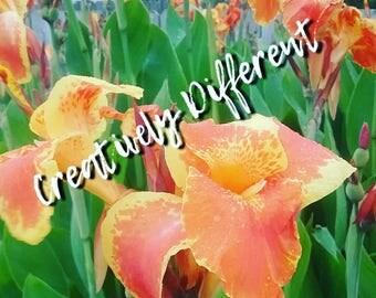 Brilliant Orange Flowers