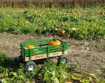 Pumpkin Field. Printable and Downloadable. October Pumpkin Field