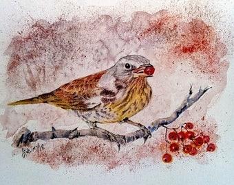 Fieldfare, wild bird, woodland, original watercolour