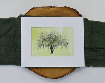 Oak Tree Drawing Fine Art Print with Watercolor Wash - Savannah's Hunter Oak