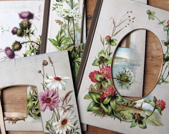 antique photo album page with lithograph floral print - choose your Victorian flower - daisy, thistle, clover or queen annes lace