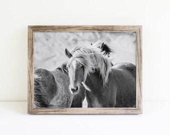 Black and White Horse Photograph, Icelandic Horses, Physical Print