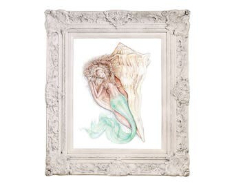 8x10 inch PRINT Mermaid Sleeping in Lightning Whelk Sea Shell Art Colour Pencil Drawing Tattoo Coastal Beach House Nautical Signed