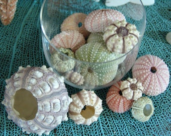 Sea Urchins Shell Gift Package Colorful Variety Lot Natural Urchin Shells Purple Pink Green Cream Frame Mirror Embellishments Beach Weddings