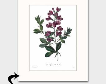 Sweet Pea Art w/Mat (Purple Home Decor, Cottage Wall Art) Matted Redoute Botanical Print