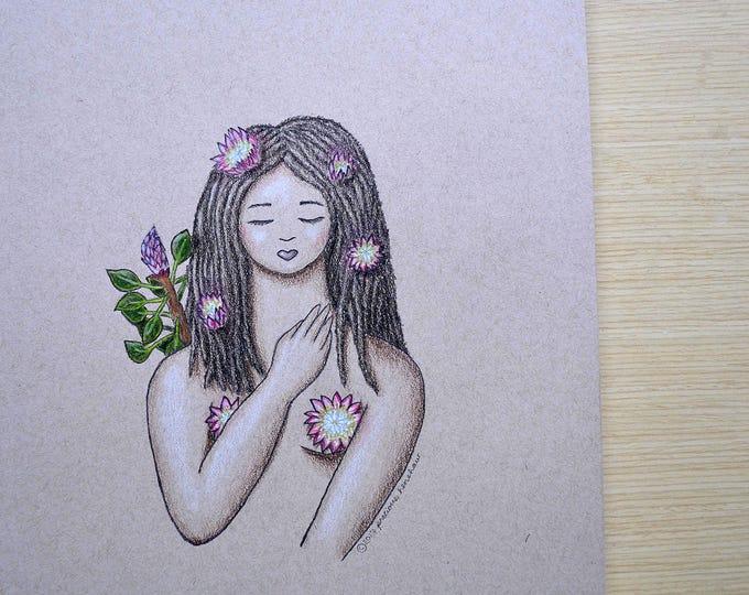 Protea • 9x12 Illustration
