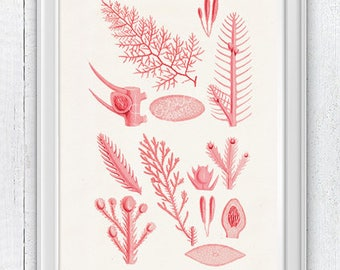 Red coral Parts 01 -Seafan parts  in red  -Marine illustration, A4 print, Coral Biology study, Science student gift SWC100