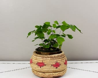 Colorful Grass Woven Lidded Basket- Small
