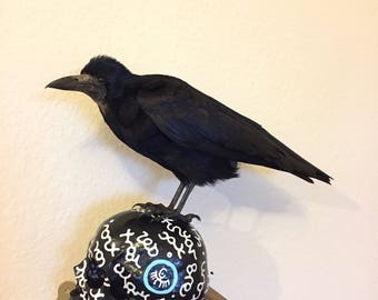 Taxidermy rook mounted on painted skull. Crow.