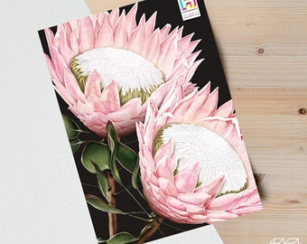 Protea - A4 print of original digital drawing - choice of background colour