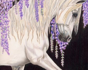 "8x10 giclee print, ""Spanish Romance"",   Andalusian horse artwork, hand drawn, horse art, Heather Anderson"