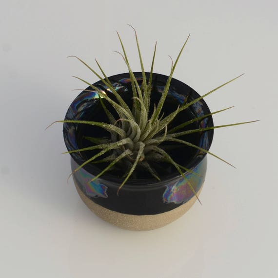 Chunky Black Pearl airplant vase