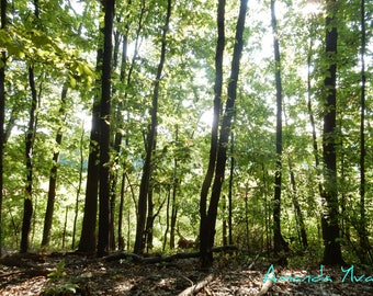 Forest Photography I - Nature photography, forest, woodlands